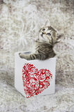 在心脏容器的小的小猫 免版税库存图片