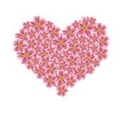 在心脏形状的老罗斯欧蓍草花 库存图片