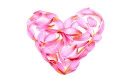 在心脏形状的赤素馨花花 库存例证