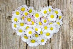 在心脏形状的雏菊花 免版税库存照片
