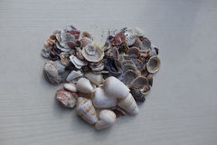 在心脏形状的贝壳  库存图片