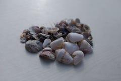 在心脏形状的贝壳  免版税库存照片