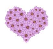在心脏形状的紫罗兰色欧蓍草花 免版税库存照片