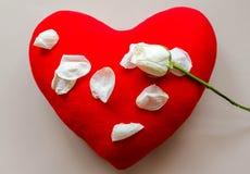 在心脏枕头的白色玫瑰 免版税图库摄影