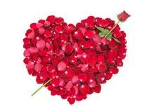 在心脏的形状的玫瑰花瓣与罗斯箭头的 图库摄影