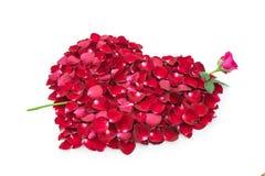 在心脏的形状的玫瑰花瓣与罗斯箭头的 免版税图库摄影