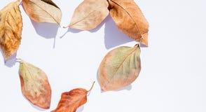 在心脏的形状的秋天叶子 秋天五颜六色的设计叶子花圈 免版税库存图片