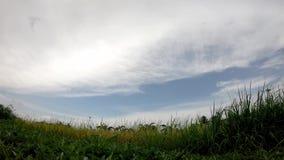 在快速地移动在领域的晚上的风和云彩的米摇动 影视素材