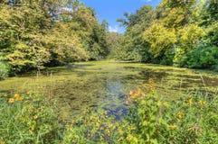 在总和期间,路易丝湖是一个国家公园在明尼苏达拍摄了 免版税库存照片