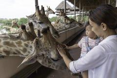 在您的手上的亚洲可爱宝贝女孩接触大长颈鹿的 免版税库存照片