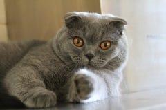 在您的猫点 免版税库存图片