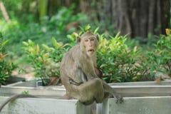 在您附近拍猴子的照片 库存照片