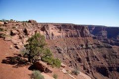 在悬崖的结构树 免版税库存照片