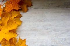 在悬铃树的秋叶 库存照片