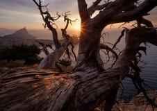 在悬崖上的老树干 免版税图库摄影