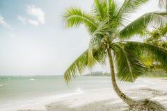 在惊人的热带海滩的晴天与棕榈树、白色沙子和绿松石海浪 缅甸 免版税库存照片
