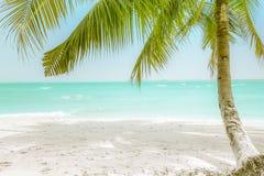在惊人的热带海滩的晴天与棕榈树 免版税库存图片