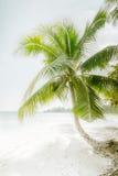 在惊人的热带海滩的晴天与棕榈树 免版税图库摄影
