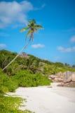 在惊人的白色沙子海滩的孤立棕榈树 免版税库存照片