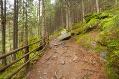 在意大利阿尔卑斯的一个典型的森林里面道路带来您lo 库存照片