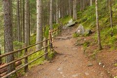 在意大利阿尔卑斯的一个典型的森林里面道路带来您lo 免版税库存照片