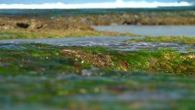 在慢绿色的海草的透明海洋水流量 影视素材