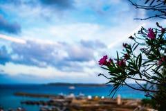 在戈佐岛海岛上的花  免版税图库摄影