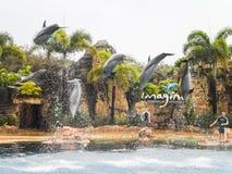 在戈尔德比尤特海世界的海豚展示。 库存图片