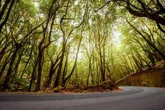 在戈梅拉岛海岛上的森林公路 免版税库存图片