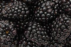 在成熟黑莓的特写镜头视图 库存图片