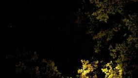 在我上的满天星斗的天空 图库摄影