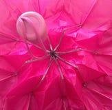 在我的伞下! 免版税库存图片