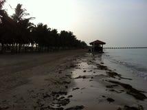在我的国家的棕榈 库存照片