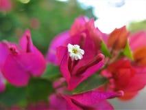 在我的庭院的美丽的红色花 库存照片