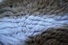 在我的房子的爱犬头发照片  免版税库存照片