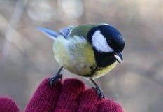 在我的手上的鸟 库存照片