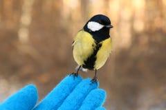 在我的手上的鸟 免版税库存照片