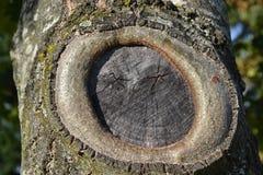 在我的树干 免版税库存照片