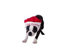 在我的第一个帽子的Poopsie圣诞节 免版税图库摄影
