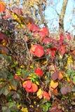 在我们本质上-秋天的颜色附近的惊人的事 库存图片