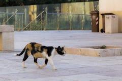 在戒备的猫在城市 免版税库存图片