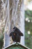 在户外公园,马瑙斯,巴西胡闹坐 免版税库存照片