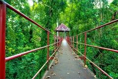 在户外泰国动物的桥梁森林自然公园绿色 免版税库存图片