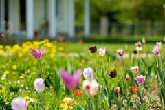 在房子前面的美丽的五颜六色的郁金香 免版税库存照片