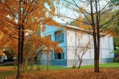在房子前面的银杏树树在晚秋天 免版税库存图片