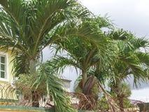 在房子前面的3朵女王/王后棕榈花 图库摄影