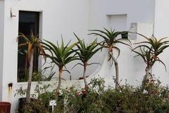 在房子前面的5棵植物 图库摄影