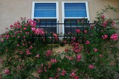 在房子墙壁上的一朵常春藤花 免版税库存图片