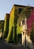 在房子墙壁上的五颜六色的叶子 免版税库存图片