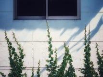 在房子墙壁上的植物 图库摄影
